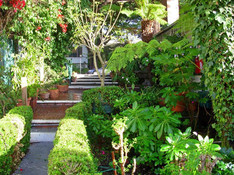 Shrubbery lined walkway leading towards the patio area