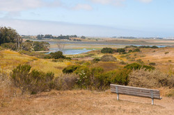 Beautiful Elkhorn Slough 30 minutes North of us