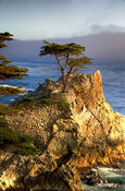 17 Mile Drive is a Famous Scenic Drive just a few minutes from Carmel. Home to the infamous Lone Cypress Tree.