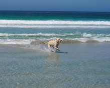 Carmel Beach is one of the few places where well-behaved dogs can roam free without a leash. Let's play fetch! Check out our dog friendly rules when planning a trip to the Inn. Rates and room restrictions apply.